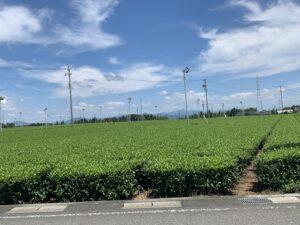 茶どころ島田市